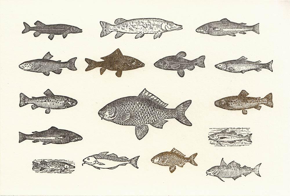 Fischen viel dating