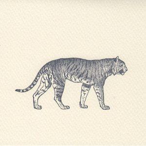 Tiger_B6